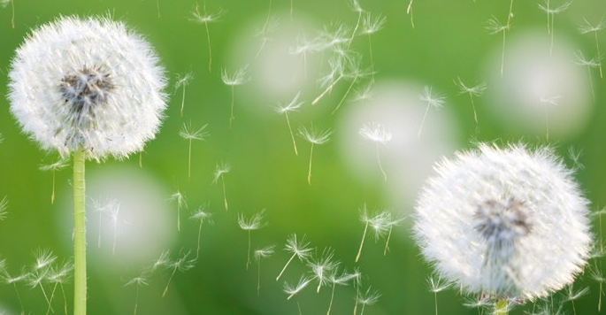 Rethinking Seasonal Allergies